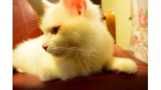 【nyanny】猫スタッフの成長記録と今後の予定。