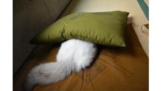 【nyanny AKIBA】新猫みーくんと先輩猫【癒やし】