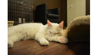 【初見さん】猫カフェのルールを確認しよう【必読】