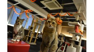 【きゃりこ&nyanny】猫カフェはとても癒される!【癒やし】