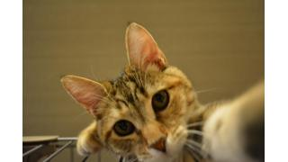 【nyanny AKIBA】復活ラッシュと猫ぱんち!【癒やし】