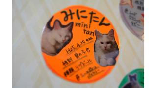 【nyanny AKIBA】愛のこもった紹介文と運動会シーズンの猫スタッフ【画像多数】
