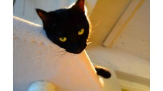 【Cat cafe nyanny】猫カフェ遠征 ダイジェスト版のようなもの【神戸・姫路】