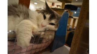 【Cat cafe nyanny】nyanny神戸元町店へ行ってきました【神戸元町】
