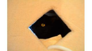 【黒猫カフェ】素敵なオーナー様と黒猫スタッフ【ねこびやか】