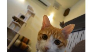 【会員制】cat cafe ねこびやか 88番地へ行ってきました【隠れ家】