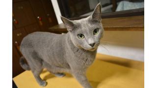 【猫カフェ】今年1年の総括!【鉄道】