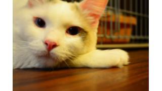 【Cat cafe nyanny】デレデレみにたんとなかまたち【癒やし】
