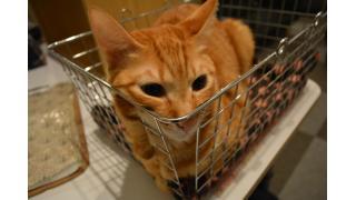 【ねこびやか】今年2度目の大阪・姫路猫カフェ遠征ダイジェスト【nyanny系列】