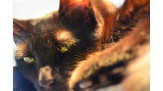 【ねこびやか】世界初の黒猫オンリーカフェを再度訪れてみた!【姫路】