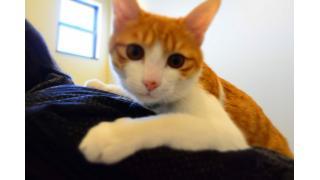 【隠れ家】cat cafe ねこびやか -88番地- を再び訪れてみた【保護猫】