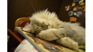 【nyanny】遊び盛りの猫スタッフとnyanny AKIBAでの写真1万枚到達へ【秋葉原】