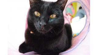 【nyanny】月に1度の兵庫猫カフェ遠征ダイジェスト【ねこびやか】