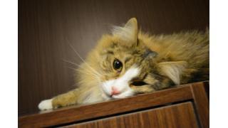 【Cat cafe nyanny】(名付け)親の心子知らず【AKIBA】