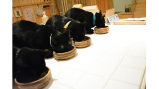 【ねこびやか】世界初の黒猫オンリーカフェを三度訪れてみた!【姫路】