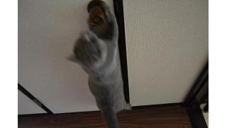 【nyanny AKIBA】ドアノブ攻略開始のノエル【癒し】