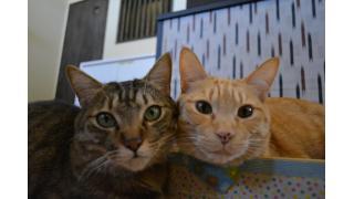 【88番地】腿の上の猫スタッフは身体も心も温かい【隠れ家】