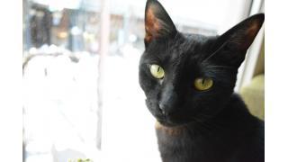 【nyanny&ねこびやか】昼間の猫スタッフはどんな感じ?【癒やし】