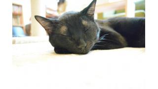 【ねこびやか】色々と興味津々の猫スタッフ【姫路】