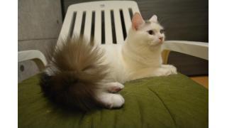 【nyanny AKIBA】猫屋敷の和室がリニューアル!【癒やし】