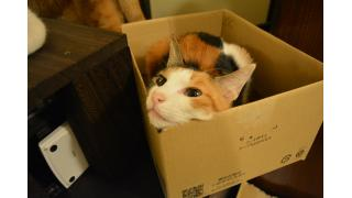 【猫カフェ】往復ファーストクラスで猫カフェ遠征に行ってきた! その1【癒やし】