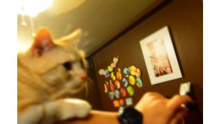 【nyanny AKIBA】冬も元気な猫スタッフ【癒やし】