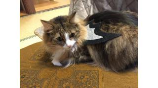 【nyanny AKIBA】愛情のこもったスタッフ様の飾り付けと猫スタッフの仮装【ハロウィン】