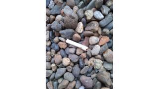 またしても例のヤクザ会社がタバコを不法投棄&不法侵入。