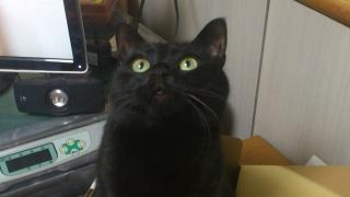 黒猫のレキ
