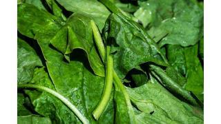 ほうれん草を茹でる時に塩を入れる理由 料理科学の森