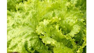 野菜を茹でるとかたくなる? 料理科学の森
