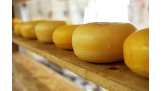 ナチュラルチーズとプロセスチーズ 料理科学の森