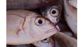 魚をゆでるくさみが取れる理由 料理科学の森