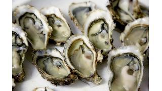 牡蠣(かき)の食中毒について 料理科学の森