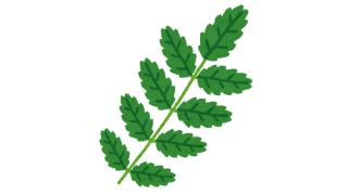 木の芽を叩く 料理科学の森