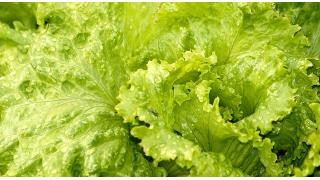 生野菜サラダは冷やしておく 料理科学の森