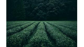 お茶の湯加減 料理科学の森