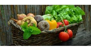 野菜の分類 料理科学の森