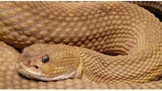 ヘビ酒の毒成分 料理科学の森