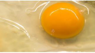 卵を入れすぎると堅いハンバーグになる 料理科学の森