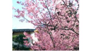 お散歩 桜はまだ咲いてませんでした。