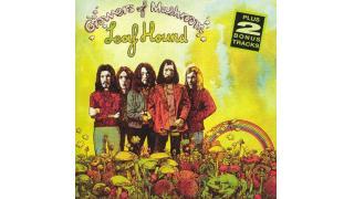 15. Leaf Hound