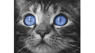 586. Blue Eyes