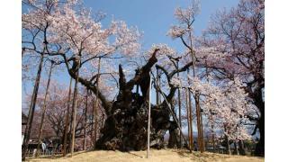 そろそろ桜の季節なので、ソメイヨシノ韓国起源説について書いてみる