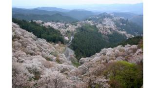 続・桜の季節なのでソメイヨシノの韓国起源説についt(ry