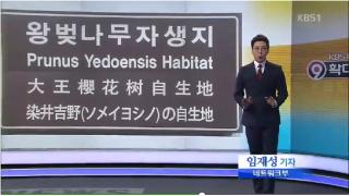 更に桜の季節なのでソメイヨシノの韓国起源説についt(ry