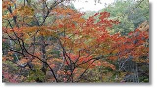 紅葉と清流と切なさと心強さと