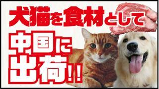殺処分される犬猫は食材として中国に出荷すれば良いのでは?【動画あり】