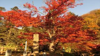 小さい秋を探してたら冬になってた