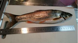 【富山県】生地で魚を釣ってきた